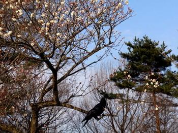 国営武蔵丘陵森林公園1394.jpg