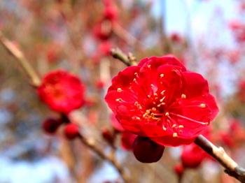 国営武蔵丘陵森林公園1436.jpg