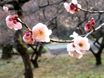 国営武蔵丘陵森林公園1441.jpg