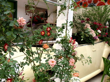 国際バラとガーデニングショウ0536.jpg