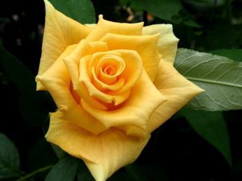 国際バラとガーデニングショウ0555.jpg