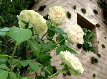 国際バラとガーデニングショウ0570.jpg