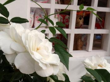 国際バラとガーデニングショウ0924.jpg