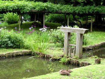 小石川後楽園1802.jpg