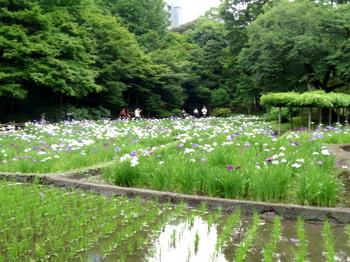 小石川後楽園1808.jpg