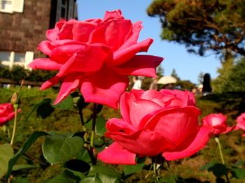 旧古河庭園2868.jpg