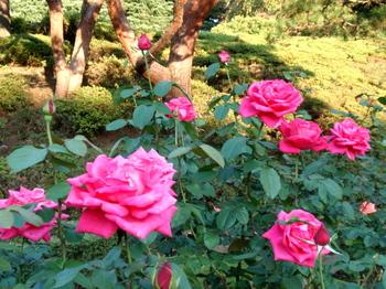 旧古河庭園3003.jpg