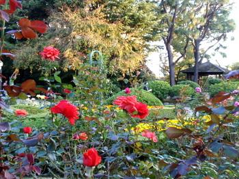 旧古河庭園3108.jpg