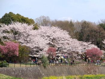 昭和記念公園0025.jpg