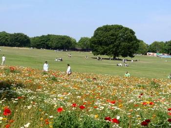 昭和記念公園0057.jpg