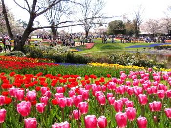 昭和記念公園0074.jpg