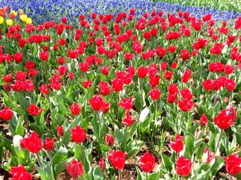 昭和記念公園0079.jpg