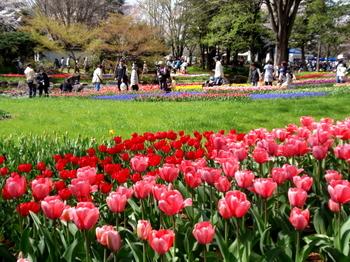 昭和記念公園0117.jpg
