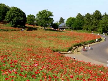 昭和記念公園0156.jpg