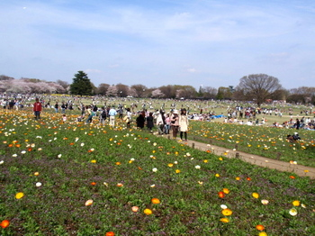 昭和記念公園0159.jpg