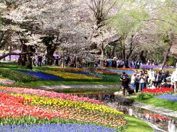 昭和記念公園0178.jpg