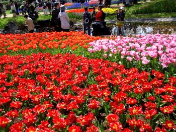 昭和記念公園0201.jpg