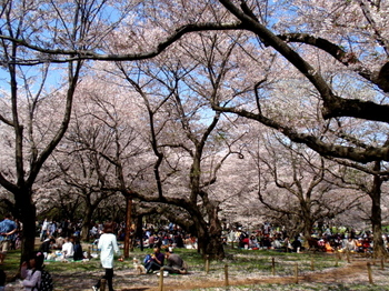 昭和記念公園0225.jpg