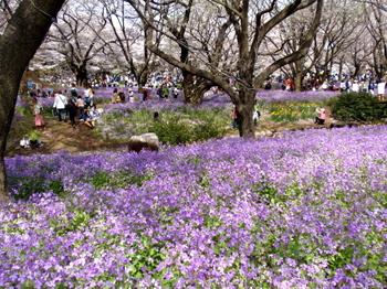 昭和記念公園0238.jpg