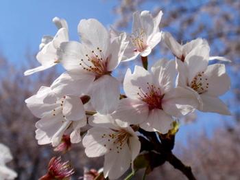 昭和記念公園0241.jpg