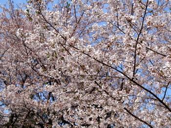 昭和記念公園0243.jpg