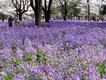 昭和記念公園0252.jpg