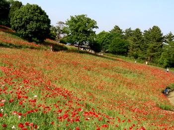 昭和記念公園0258.jpg