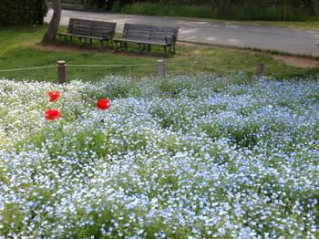 昭和記念公園0268.jpg