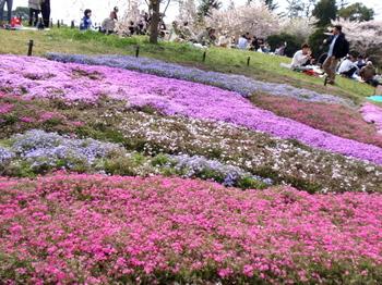 昭和記念公園0298.jpg