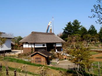 昭和記念公園0317.jpg