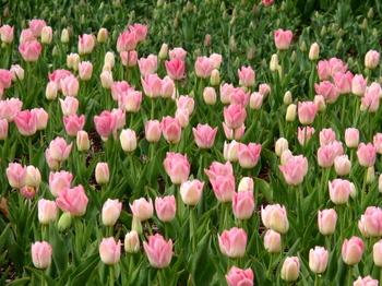 昭和記念公園0326.jpg
