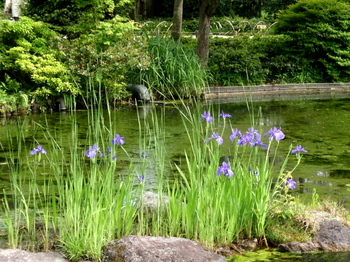 昭和記念公園0392.jpg