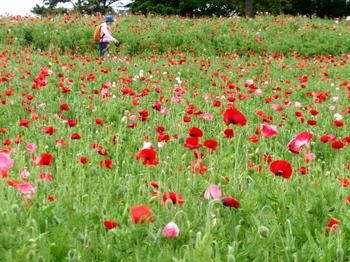 昭和記念公園0486.jpg