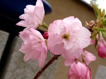 昭和記念公園0523.jpg