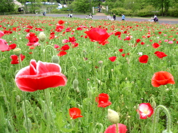 昭和記念公園0532.jpg