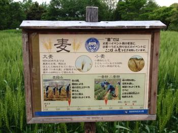 昭和記念公園0539.jpg