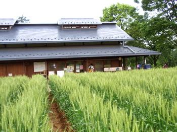 昭和記念公園0549.jpg