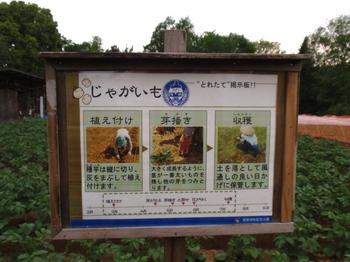 昭和記念公園0550.jpg