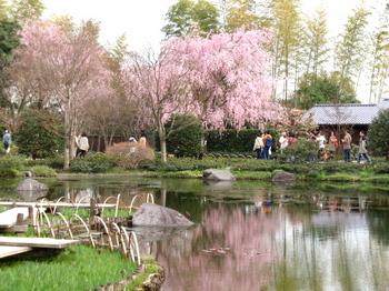 昭和記念公園0556.jpg