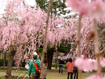 昭和記念公園0613.jpg