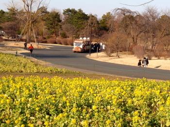 昭和記念公園0795.jpg