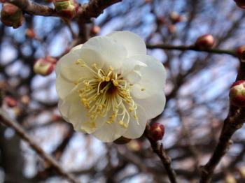 昭和記念公園0816.jpg