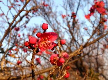 昭和記念公園0830.jpg