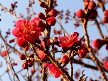 昭和記念公園0831.jpg