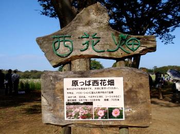 昭和記念公園0838.jpg