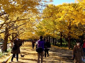 昭和記念公園0846.jpg