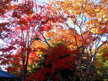 昭和記念公園0955.jpg