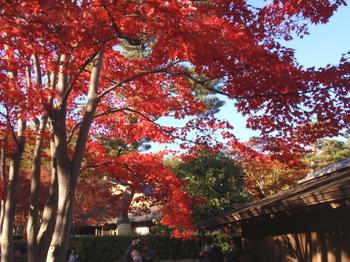 昭和記念公園0991.jpg