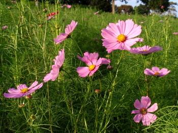 昭和記念公園0994.jpg