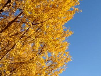 昭和記念公園1020.jpg